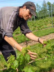 Marcel - The Vineyard Manager