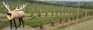 Nova Scotian wine uncorked