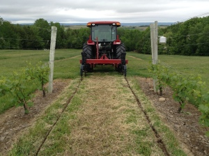 Ripping - Aerating between each row.