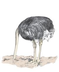 ...much like an ostrich.
