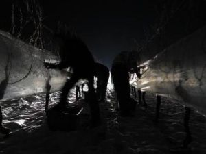 Harvesting by night to keep the grapes frozen