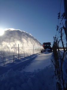 Snow blowing the snow from between the vines.